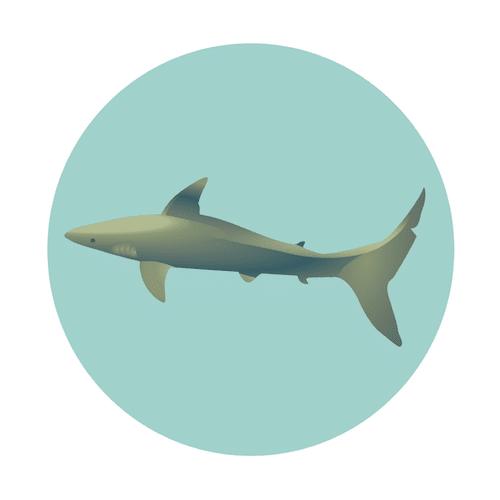 Oahu Shark Dive, North Shore, Oahu, Hawaii