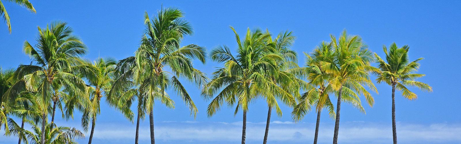 Oahu Fast Facts, About Oahu, Waikiki, Honolulu, Hawaii