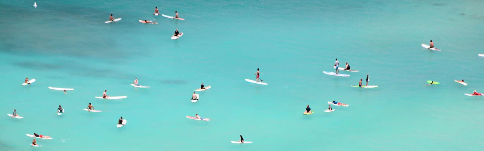 Reviews, Our Waikiki Properties